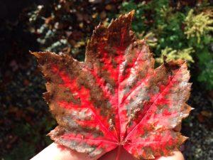 Latest Gardening News Wirral Tree Surgeon