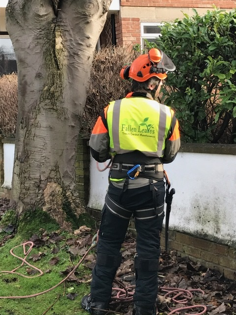 Latest Wirral Tree Work This Weekend